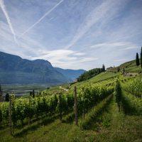 Bespovratna sredstva za vinogradare