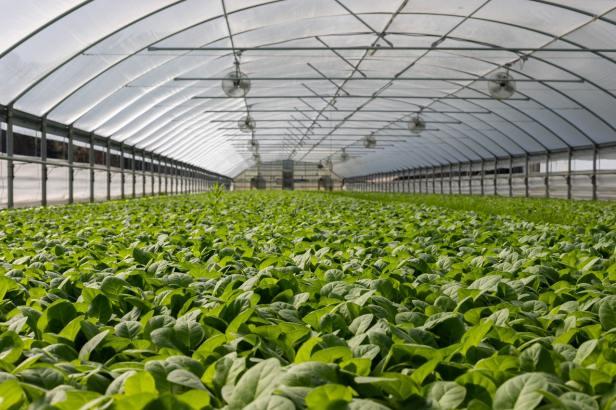 Najava novog natječaja za proizvođače povrća u plastenicima Mjera 4.1.1.
