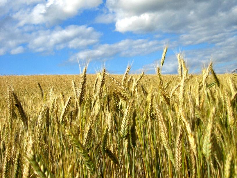 Bespovratne potpore za poljoprivredu 2021