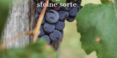 Mjera 4.1.1. Vinogradi stolne sorte